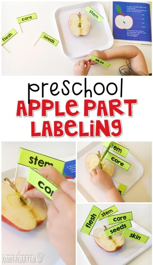 This real apple part labeling activity is a great way to reinforce science vocabulary. Great for tot school, preschool, or even kindergarten!