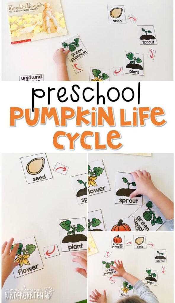 """Practice pumpkin vocabulary and learn about the pumpkin life cycle with this sequencing activity that goes perfectly with """"Pumpkin, Pumpkin"""" by Jeanne Titherington. Great for tot school, preschool, or even kindergarten!"""