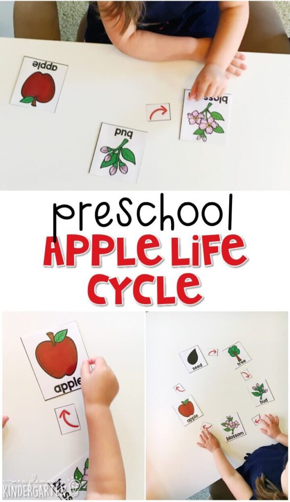 Practice sequencing the life cycle of an apple with this easy activity. Great for tot school, preschool, or even kindergarten!
