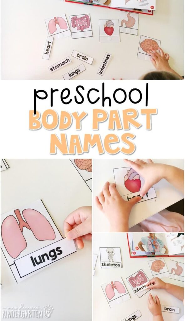 Practice naming and labeling body parts with these vocabulary cards. Great for a human body theme in tot school, preschool, or even kindergarten!