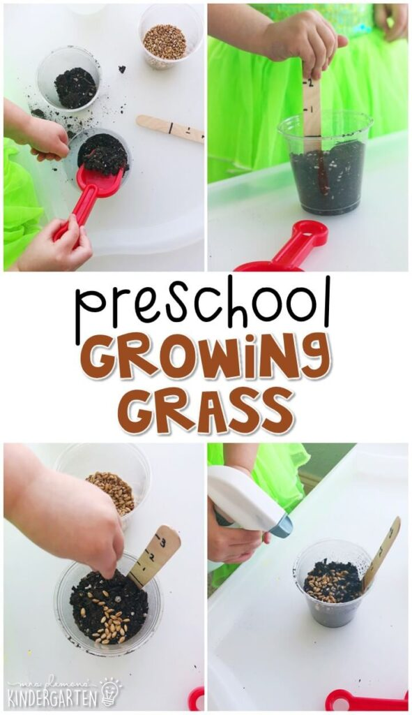 This grass growing science activity tied in perfectly with our plant theme. Great for tot school, preschool, or even kindergarten!