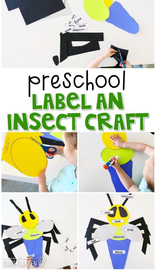 This label an insect craft was a great way to combine fine motor practice with science concepts. Great for an insect theme in tot school, preschool, or even kindergarten!