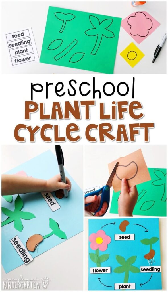 This plant life cycle craft was a fun way to show our learning with lots of fine motor practice. Great for a plant theme in tot school, preschool, or even kindergarten!