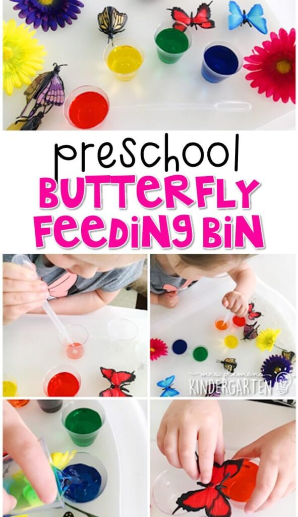 This butterfly feeding bin was a combination science and sensory exploration. Great for spring in tot school, preschool, or even kindergarten!