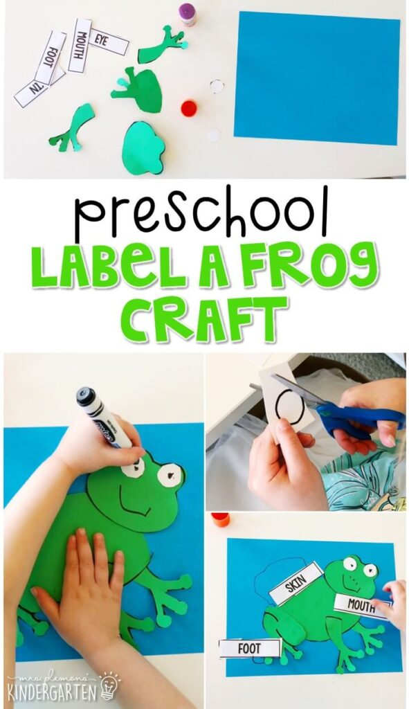 This label a frog craft was a great way to combine fine motor practice with science concepts. Great for a frog theme in tot school, preschool, or even kindergarten!