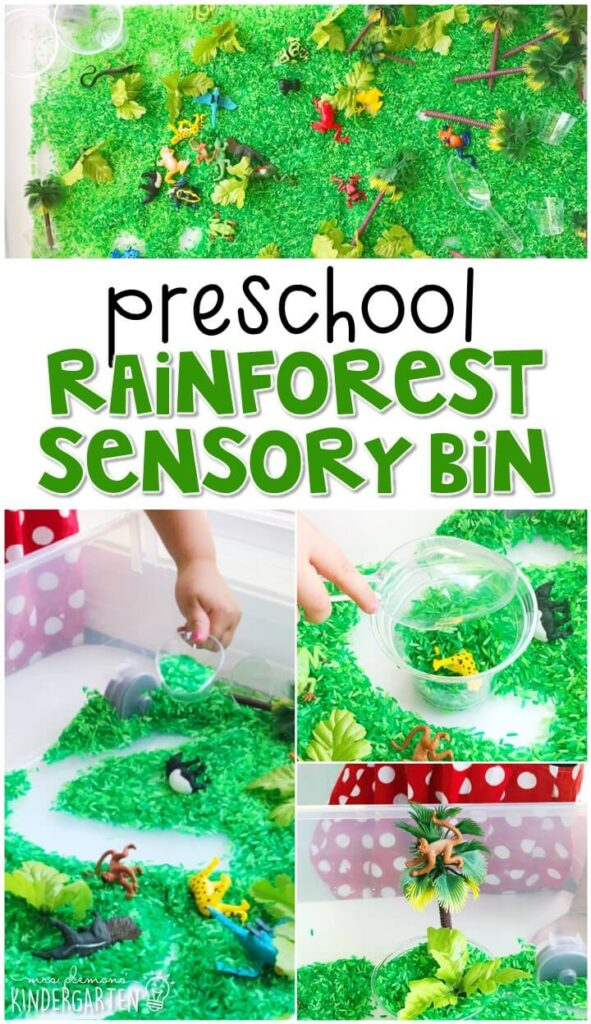 We LOVE this rainforest sensory bin. Perfect for exploration with a rainforest theme in tot school, preschool, or even kindergarten!